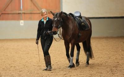 Signale Ihres Pferdes