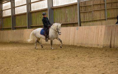 Wie spüre ich eigentlich ob ein Pferd schwingt?