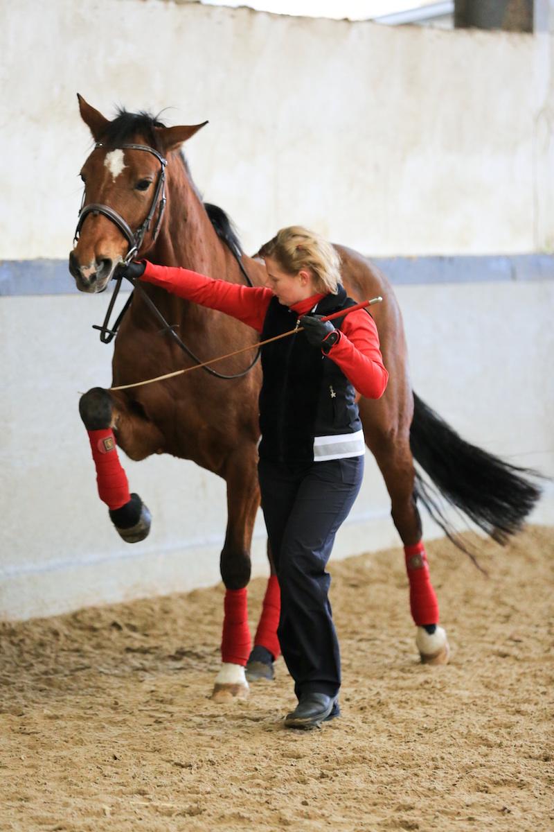 Simone und Esprit arbeiten am Spanischen Schritt