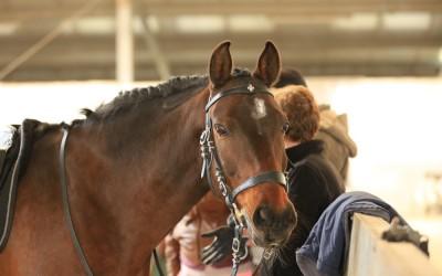 Wie spüre ich ob ein Pferd schwingt?