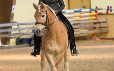 Schnaubt Ihr Pferd ab?