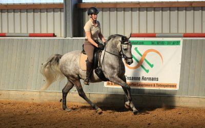 Ausbildungstagebuch No. 4 – Welcher Sattel für das junge Pferd?