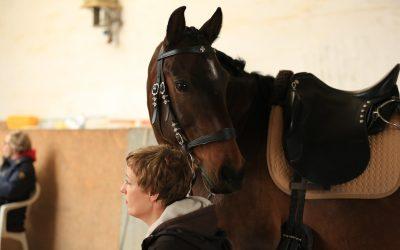 Ausbildungstagebuch No. 2 – Urlaub für das Pferd