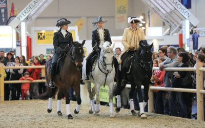 """Auftrittszeiten Messe """"Hund & Pferd"""""""