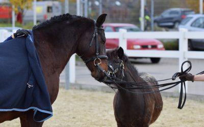 Auftritte Jubiläum Krämer Pferdesport