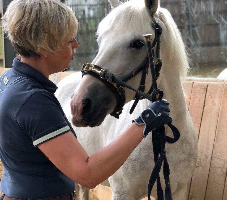 Ausbildungstagebuch No. 7 – Ihr Pferd hat immer einen Grund, warum es etwas nicht ausführt. Sie haben die Aufgabe diesen zu finden.