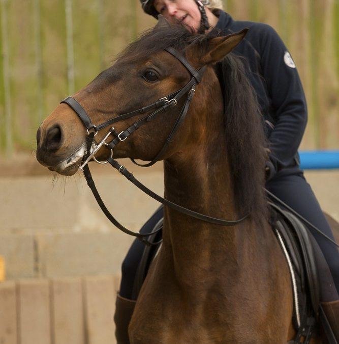 Loben Sie Ihr Pferd so oft es geht!