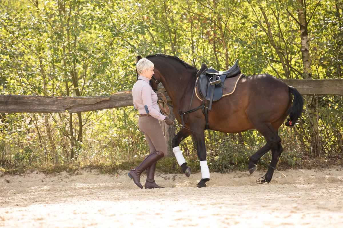 Drei Pferde bei einer Vorführung im Konterschulterherein an der Hand
